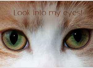 Funny photo card - Look into my eyes